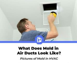 pictures of mold in air ducts