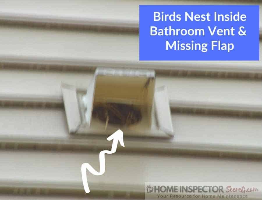 bird nest inside bathroom vent (1)