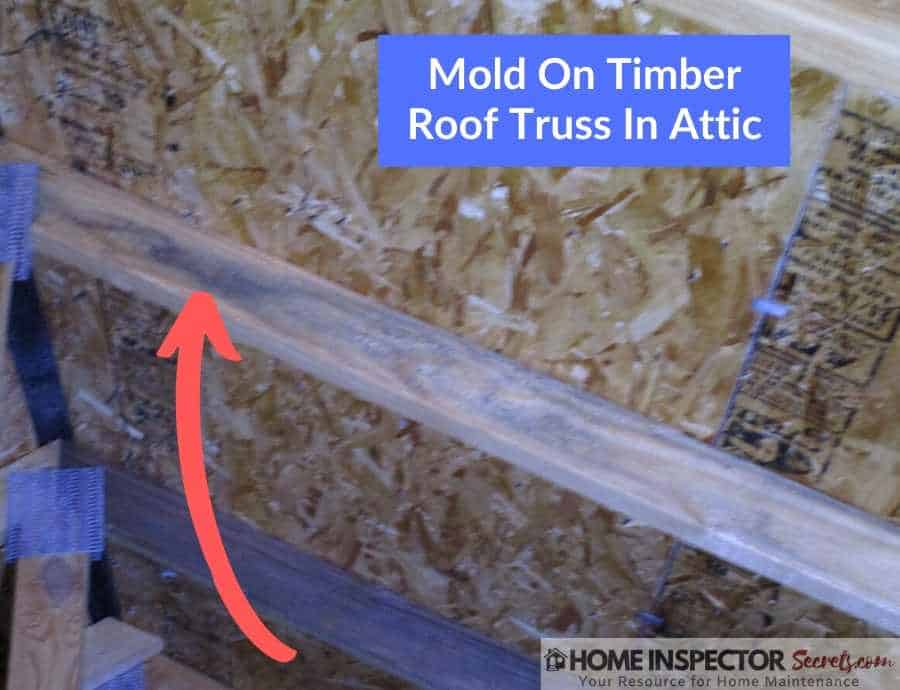 mold on roof truss