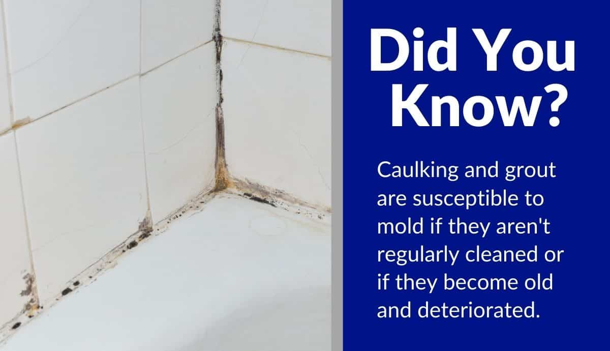 how to prevent mold in bathroom without fan